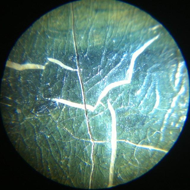 Craquelures sous microscope
